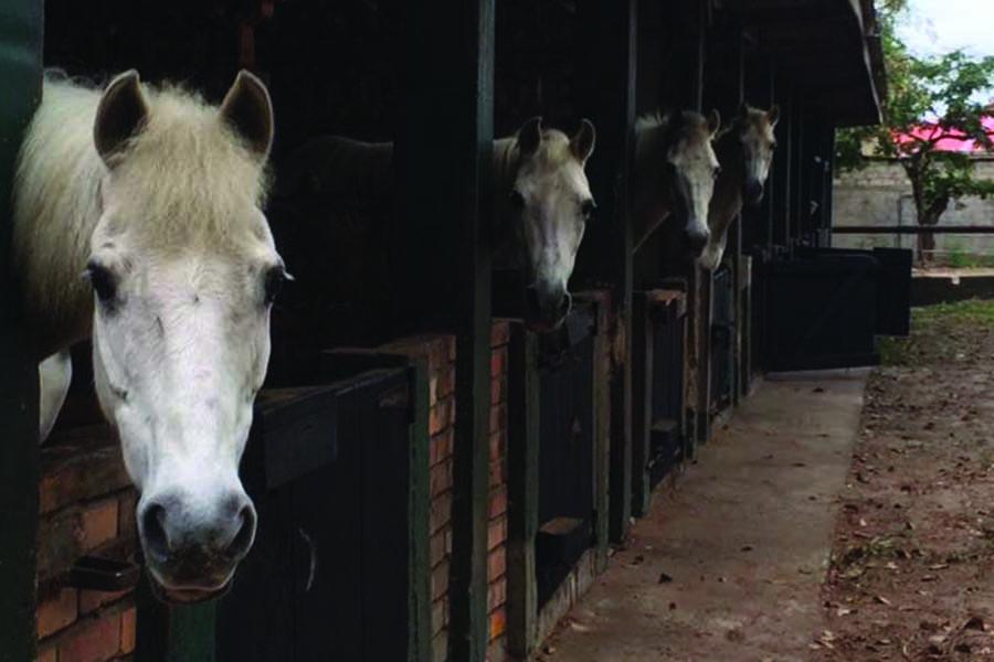 chk-chevaux-box-_0001_chevaux box 20953869_1975210929389064_1469145553120494773_n