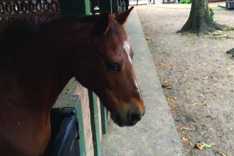 chk-chevaux-box-_0002_chevaux box 20954033_1975210936055730_5300411537687182692_n