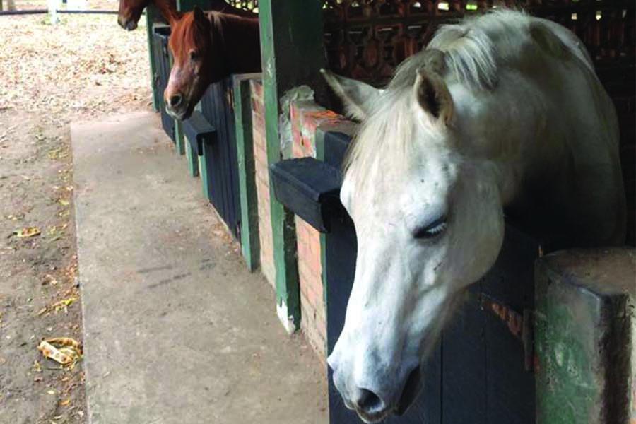 chk-chevaux-box-_0004_chevaux box 21032805_1975210946055729_4819654295541222386_n