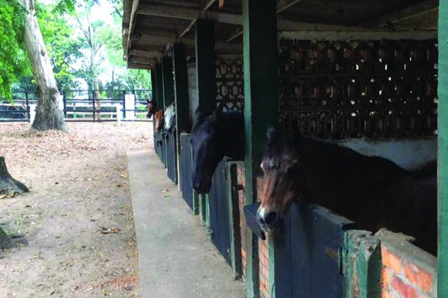chk-chevaux-box-_0007_chevaux box 21034354_1975210996055724_6101451681925067063_n