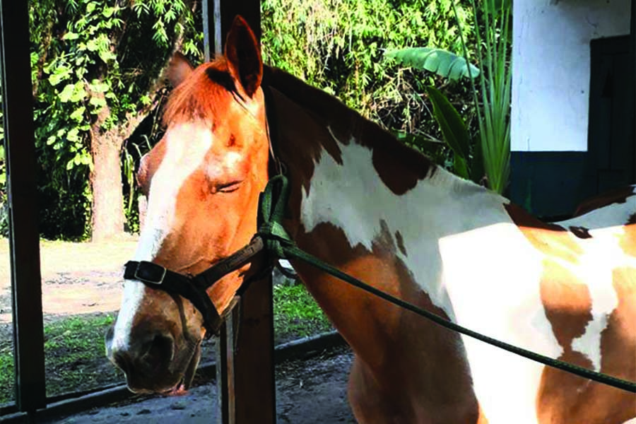 chk-chevaux-box-_0010_chevaux box 22310247_1994456834131140_2220478446351367868_n