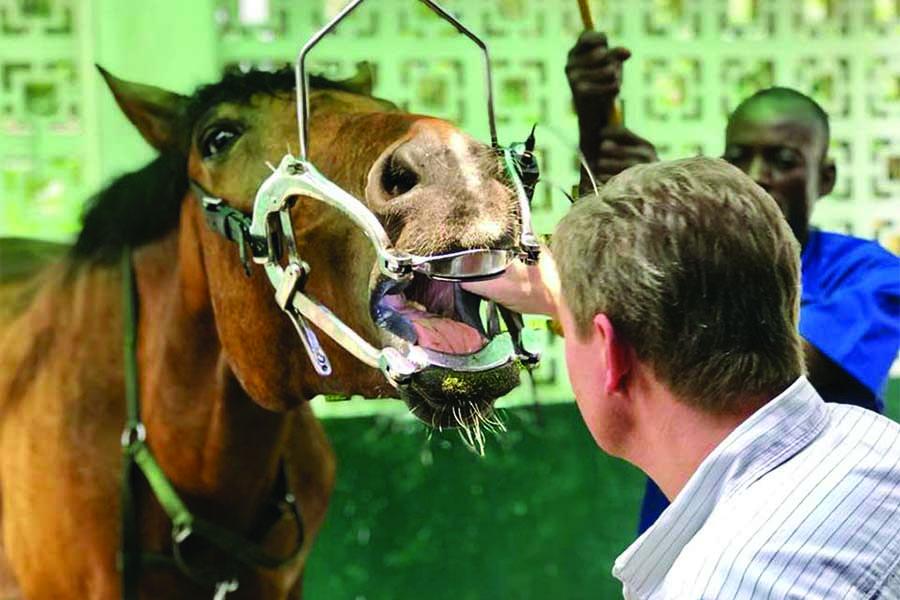 chk-chevaux-box-_0011_chevaux box 27459890_2052481454995344_5622827127107317794_n