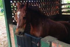 chk-chevaux-box-_0000_chevaux box 20953065_1975210972722393_4400667668215489185_n