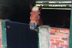 chk-chevaux-box-_0003_chevaux box 20954057_1975211009389056_4726855423807746141_n