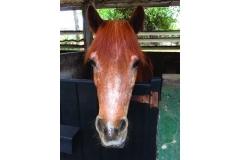 chk-chevaux-box-_0006_chevaux box 21034260_1975210939389063_5243062874774978856_n