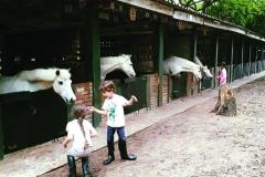 chk-chevaux-box-_0008_chevaux box 21740530_1988912171352273_6280345086126534253_n