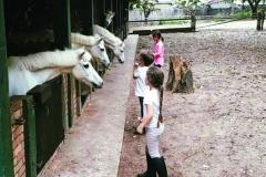 chk-chevaux-box-_0009_chevaux box 21761663_1988912191352271_8648746723724337253_n